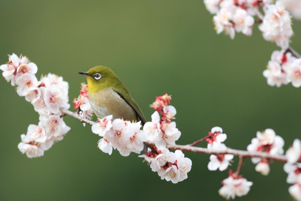 春の童謡のおすすめといえばこの5曲!