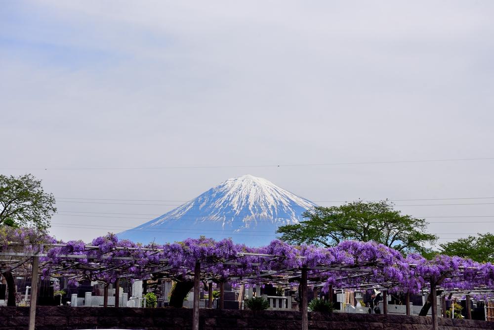 綺麗な花で思い出す日本の花とは