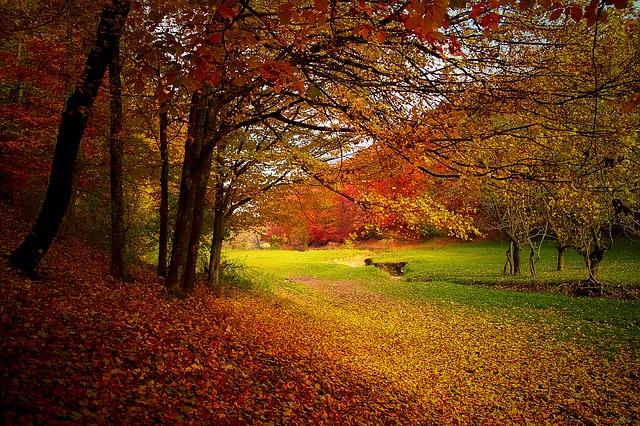 紅葉の季節がやって来た!紅葉を楽しむためのおすすめ方法10選