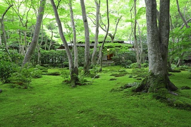 日本語は知れば知るほど奥深い。英語では直訳できない日本語17選