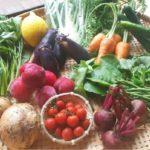 勇太の野菜箱 ようこ流保存方法